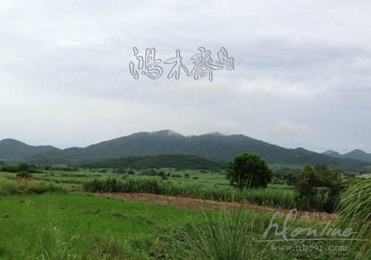 海南黄花梨产区 (2).jpg
