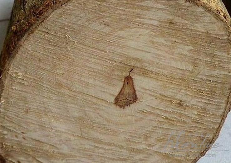 黄花梨的格与白皮比例 (1).jpg